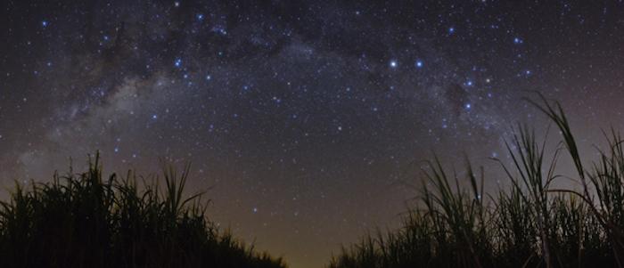 grass-stars