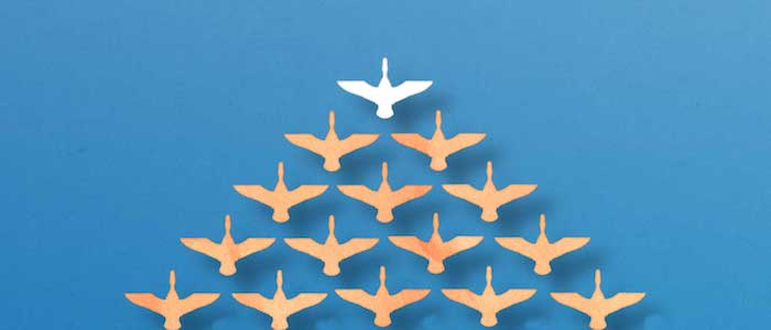 leadership-bird-formation